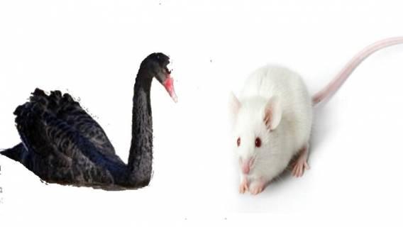Crni Labudovi i bijeli miševi