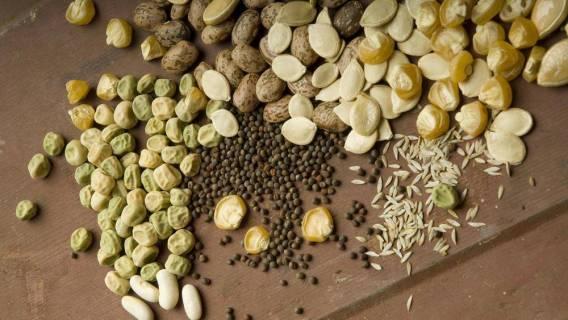Novim Zakonom o sjemenu protiv domaćih okusa