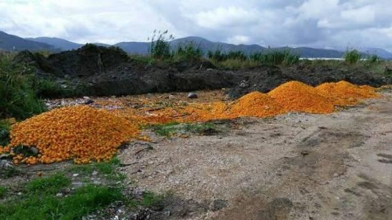 Zdravu domaću hranu bacamo a smeće uvozimo, ništa novo?!